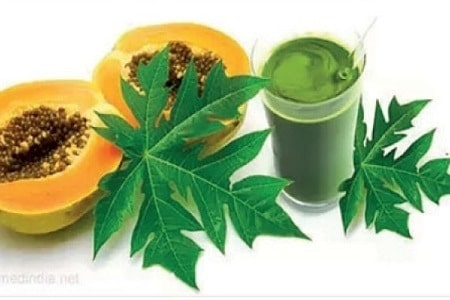 Reasons you should start drinking papaya leaf juice